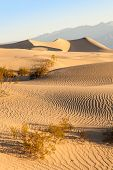 stock photo of mesquite  - Sand dunes of Mesquite Flat in Death Valley Desert - California