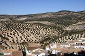 image of pueblo  - View over rooftops towards the olive groves Pueblo blanco  - JPG