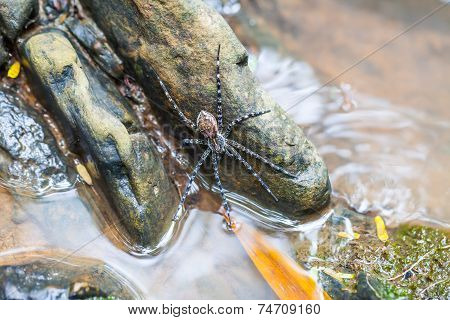 Spider On The Rock In The Waterfall