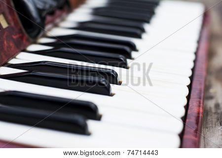 Keyboard Of Accordian