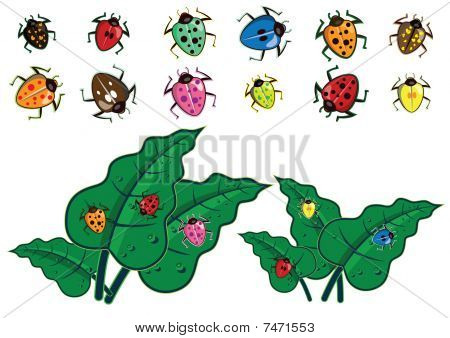 Colorful Insect In Vector