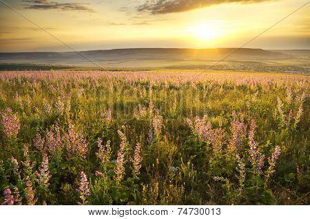 Sunset On Summer Mountain Meadow.