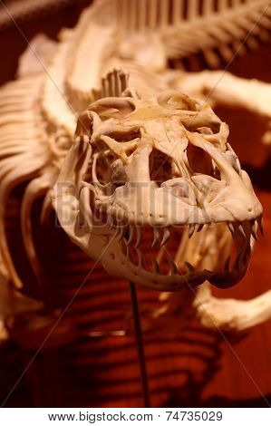 Dragon reptile skeleton 2