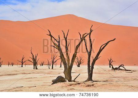 Namib-Naukluft Park