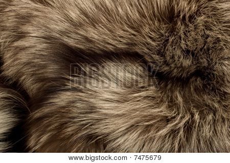 Polar Fox Fur. Useful As Texture