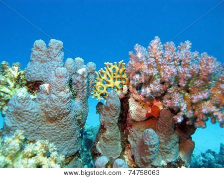 coral reef with hard corals at the bottom of tropical sea