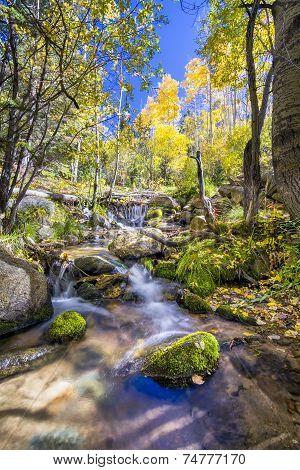 Alpine Stream In New Mexico