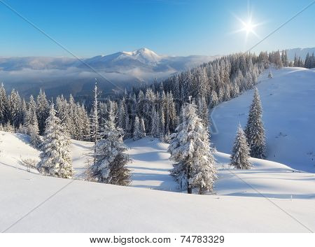 Winter landscape a clear frosty day in the mountains. Ukraine, Carpathian Mountains