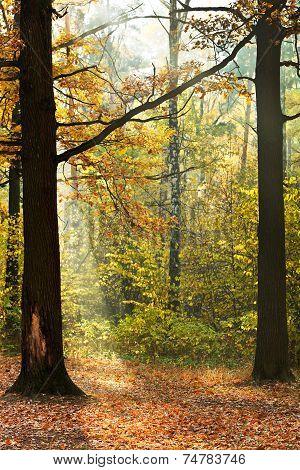 Sunshine Lit Glade In Autumn Forest