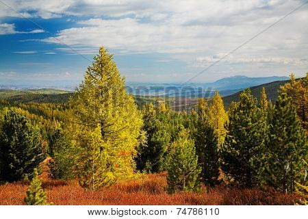 Autumn forest with high mountain on background