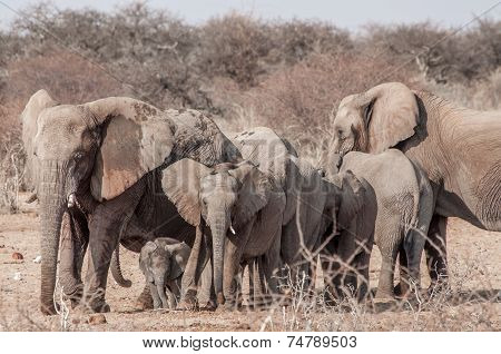 A Family Of Elephants
