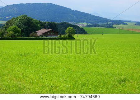 Green bavarian summer landscape