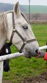stock photo of feeding horse  - Horse feeding on the farm behind the city - JPG
