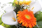 Постер, плакат: Bright bouquet Calla and Gerbera flowers