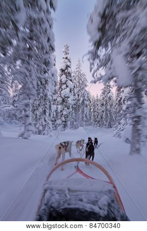 Husky Ride At Sunset