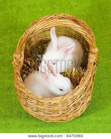 weiße Kaninchen in Korb
