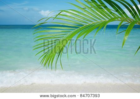 Palm leaf, blue sea and tropical white sand beach ander the sun