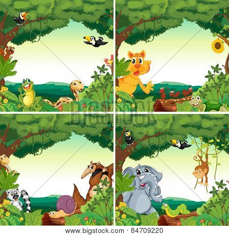 Many animals in the forests