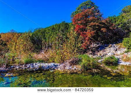 Bright Beautiful Fall Foliage Surrounding Clear Pool in Lost Maples State Park, Texas