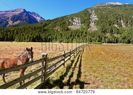Headwaters National Park Krimml. Rural idyll. Farm fields separated from the dirt road the low fence made of logs. On the shore stands the rustic horse