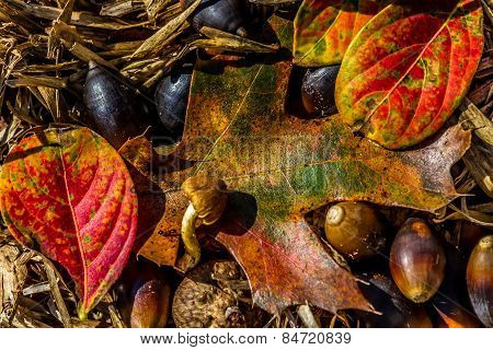 Closeup of Beautiful Intricate Seasonal Fall Foliage.