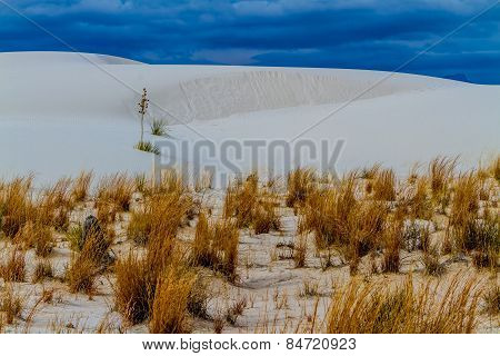 The Amazing White Sands Desert Dunes of White Sands Monument National Park in New Mexico