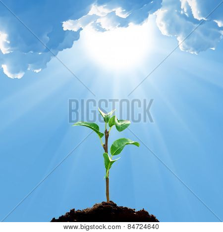 Green sprout ,  blue sky with sun and clouds