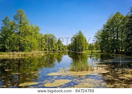 hot summer day on bog, take it in Ukraine near Poltava City
