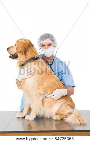 Veterinarian examining a dog on white backboard