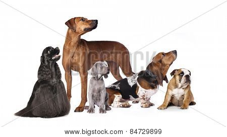 groups of dogs