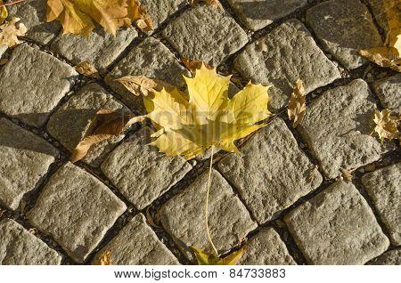 Maple leaf on cobblestone