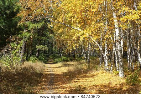 Gold autumn landscape - path in a mixed forest