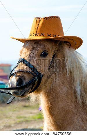 Horsy Pony
