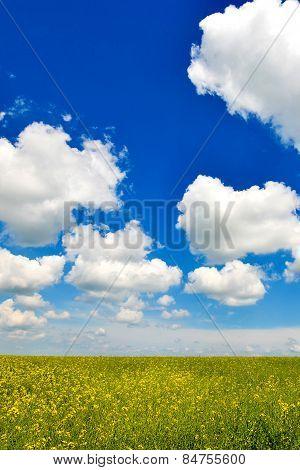 Beautiful Field With Wonderful Sky