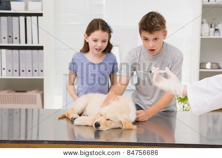 Vet examining a dog with its scared owner in medical office