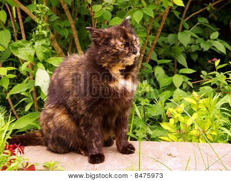 Portrait of a colorful cat with a blurred background