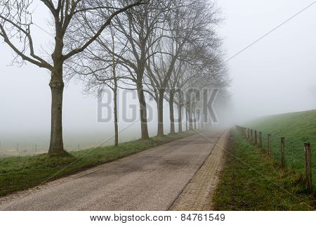 Misty Row Of Leafless Trees Beside A Country Road