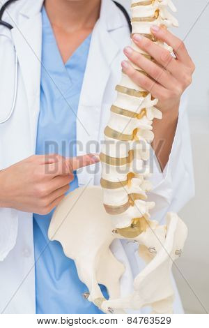 Cropped image of female doctor with anatomical spine in clinic