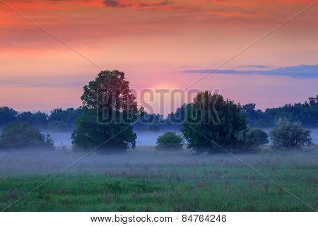 Early morning scene in steppe