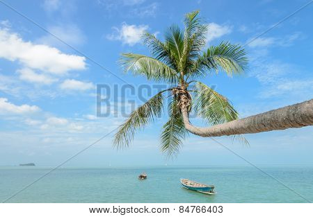 Nature Background Of Sea With Coconut Palm Tree