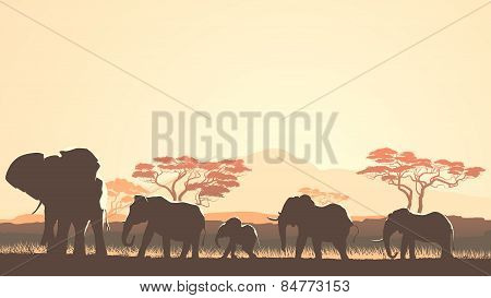 Horizontal Illustration Of Wild Animals In African Sunset Savanna.