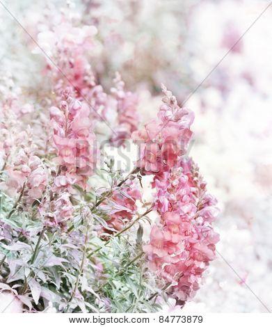 Digital Painting Of Pink Snapdragon Flowers