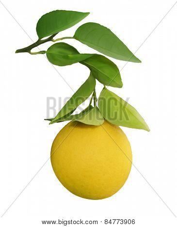 Digital Painting Of Orange Tree Branch