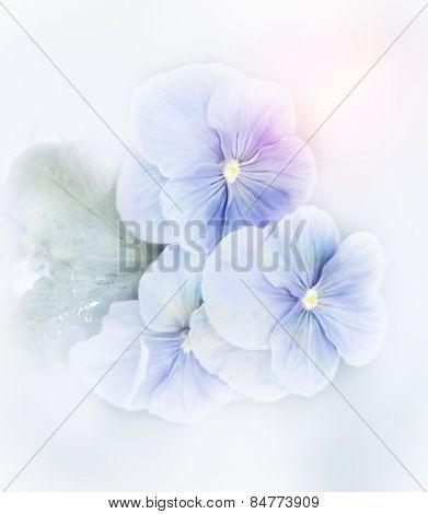 Digital Painting Of Blue Violets Flowers