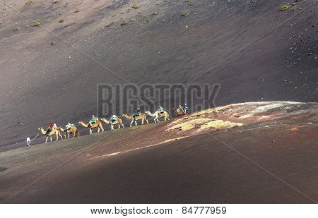 Tourists On A Camel Safari