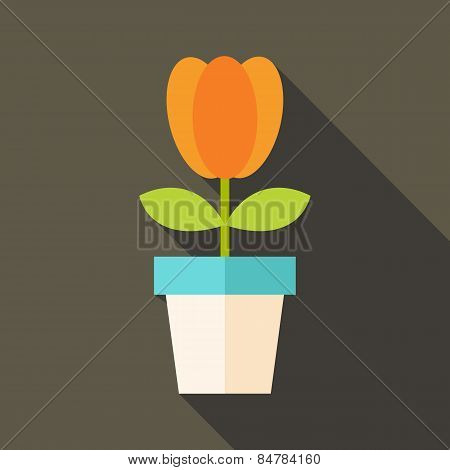 Pot With Tulip Flower