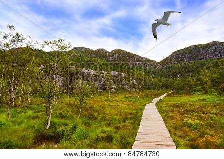 Mountains on the way to the Preachers Pulpit Rock in fjord Lysefjord - Norway - nature and travel background