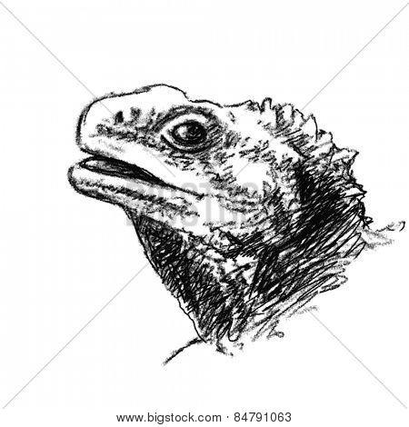 Lizard head Charcoal sketch Vector
