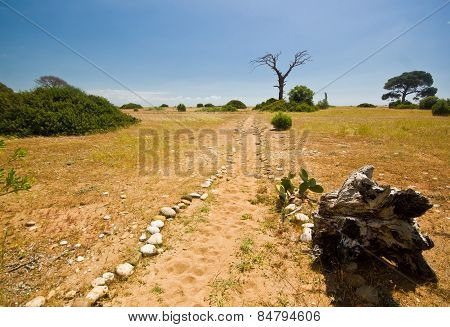sandy beach with green bushes and dry dead tree