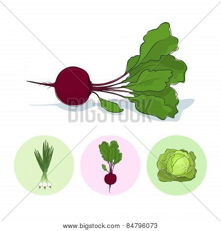 Icons Green Onion,beet,cabbage